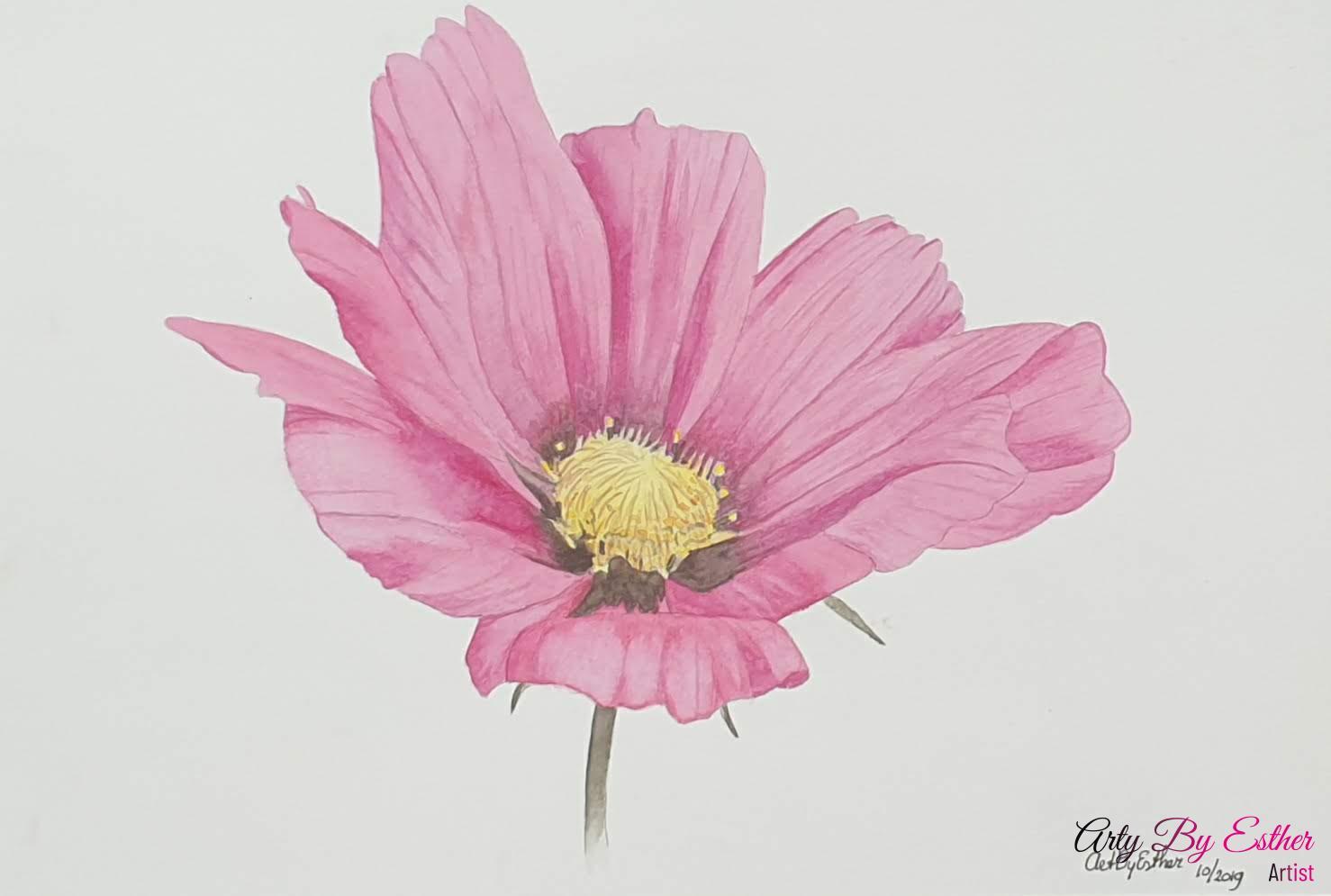 Pink Cosmos Aquarelpainting flower