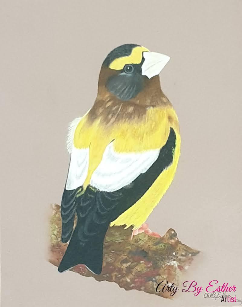 Evening grosbeak pastelpainting bird