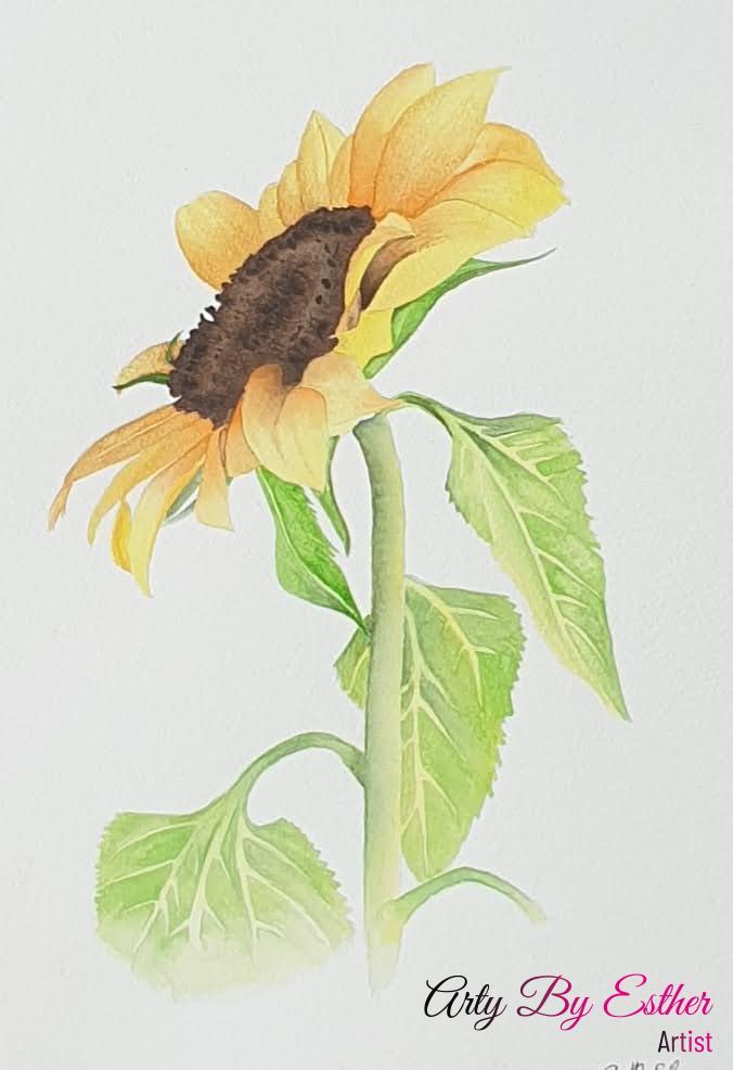 Sunflower aquarel