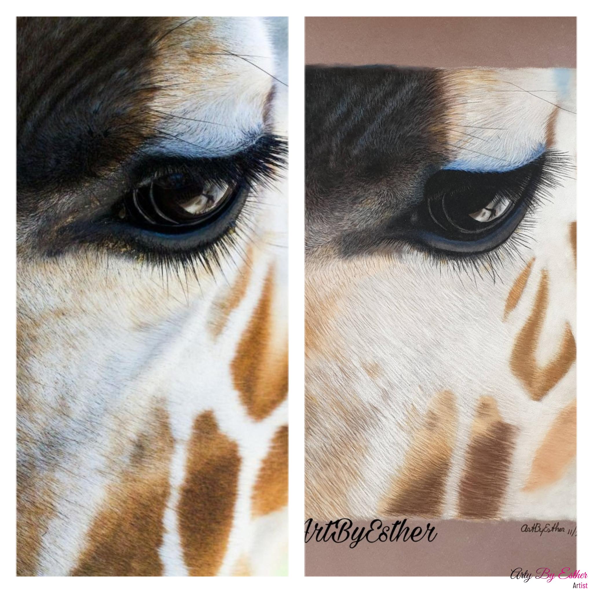 Giraffe Pastelpainting wildlife