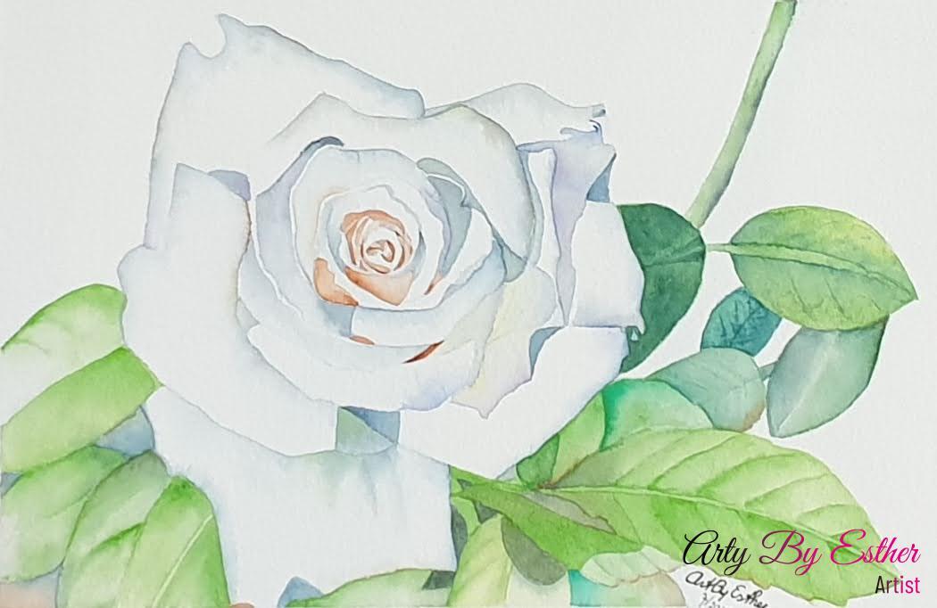 White rose Aquarelpainting