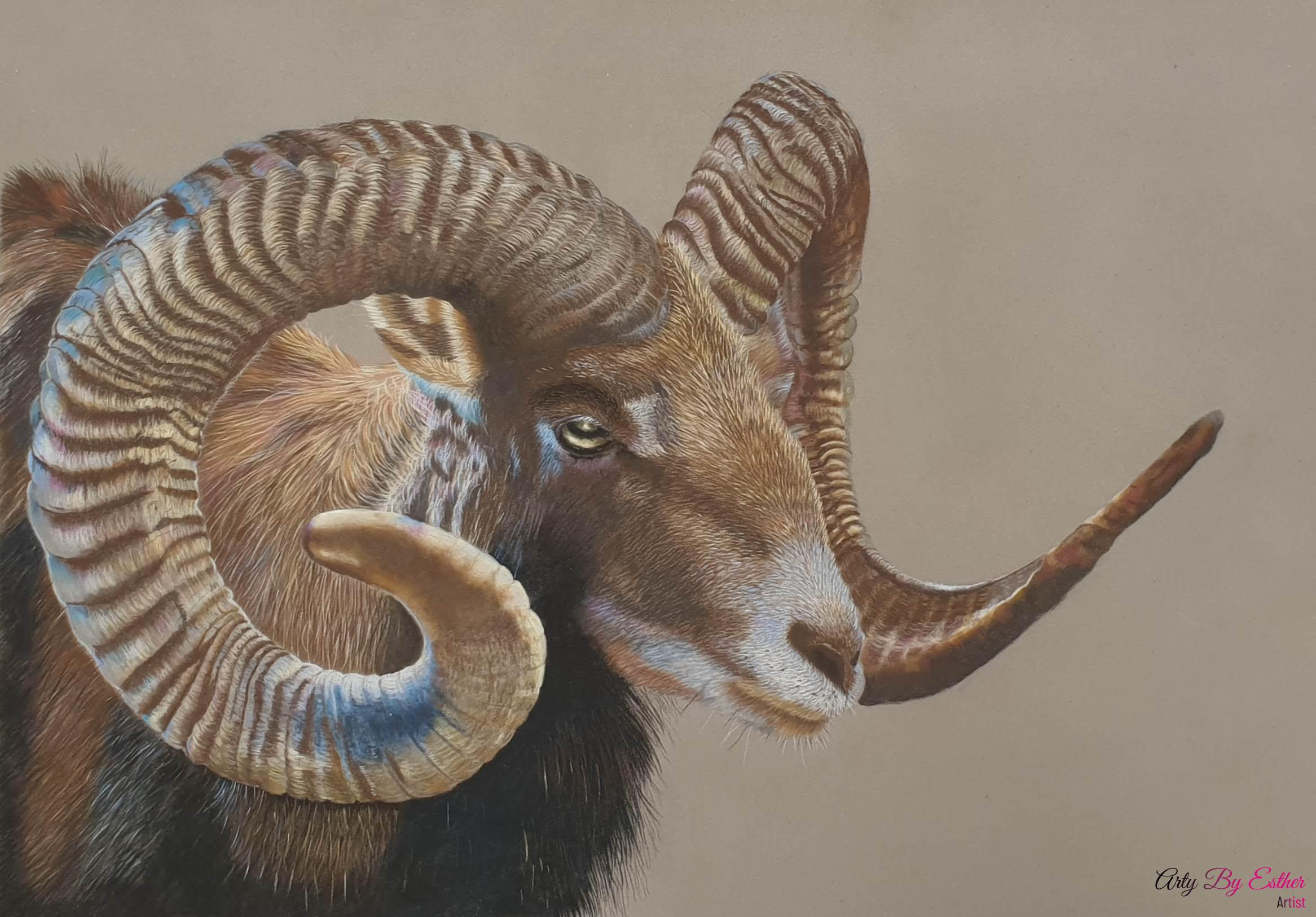 Sheep pastelpainting
