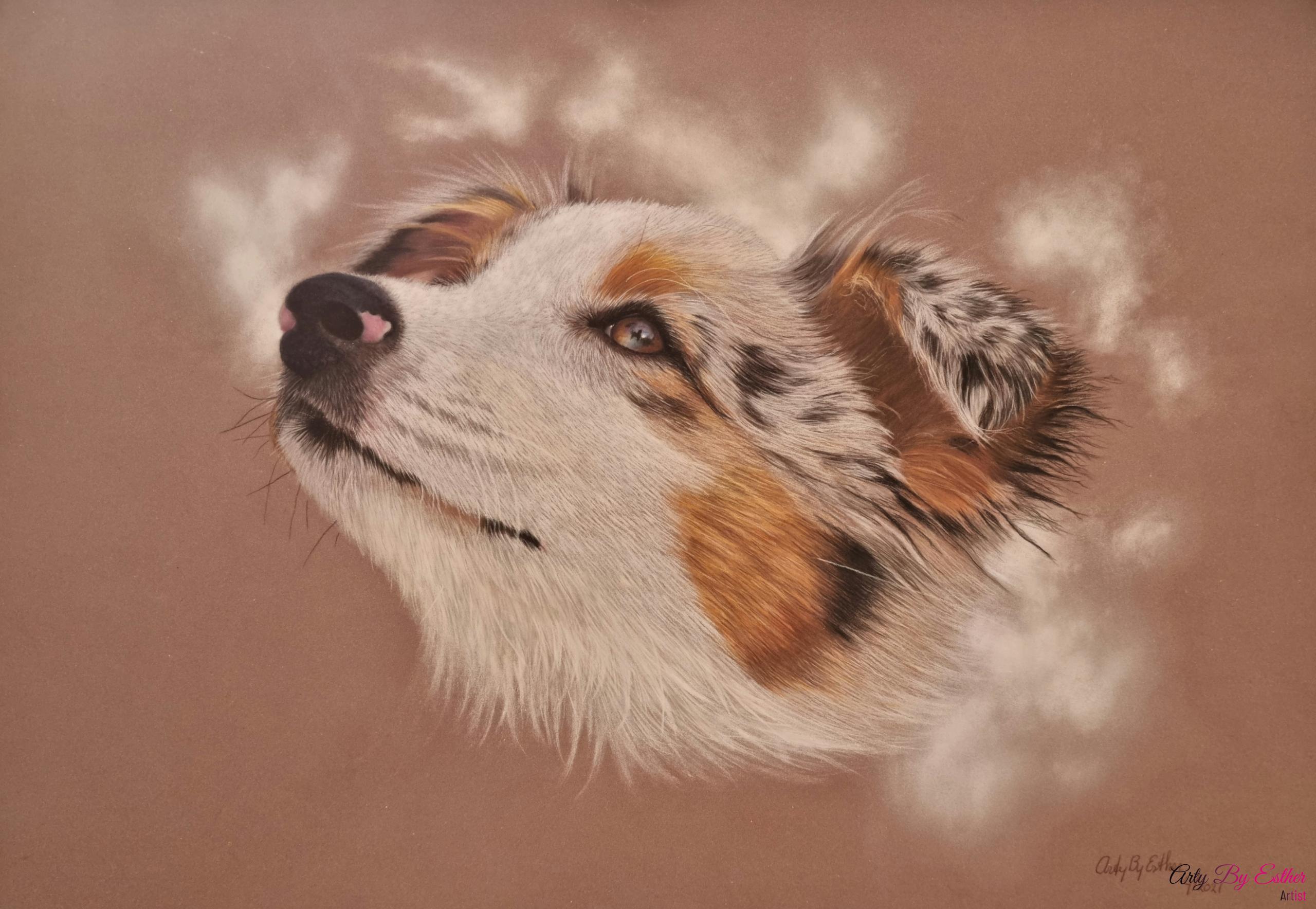 Australin sheperd dog pastelpainting