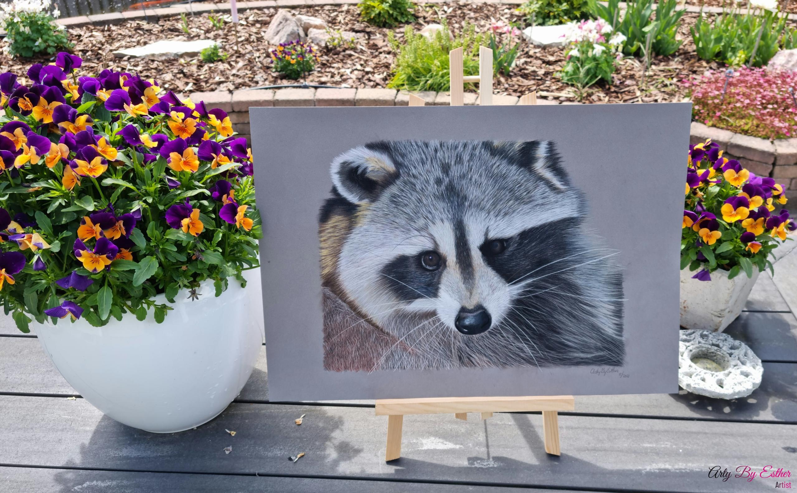 Raccoon pastelpainting