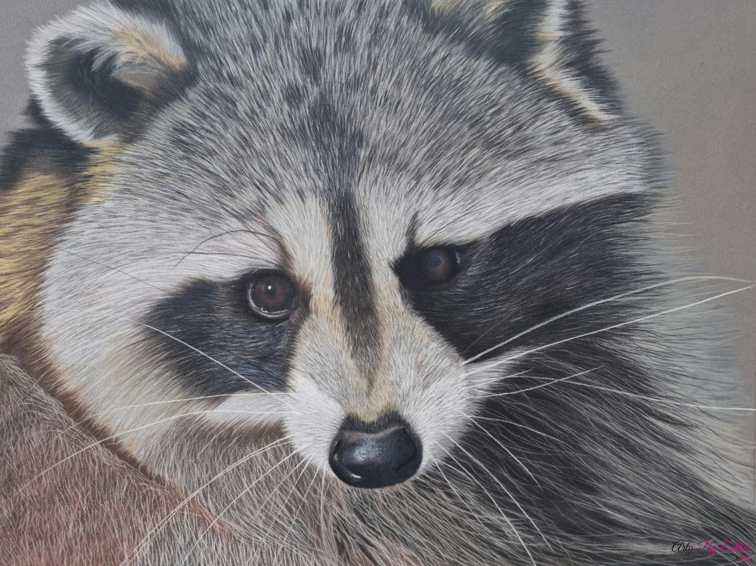Raccoon pastelpainting wildlife
