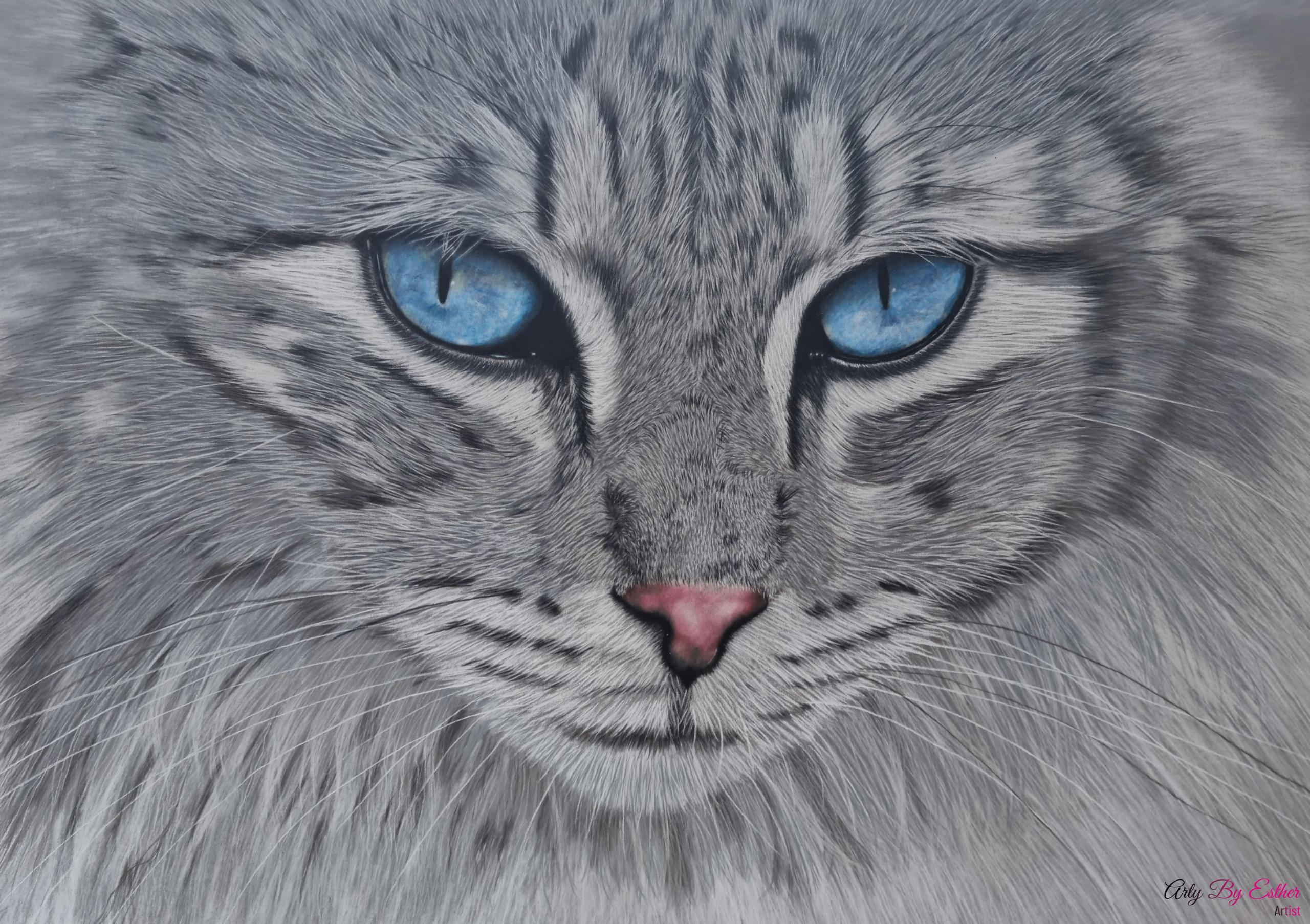 Ragdoll cat pastelpainting